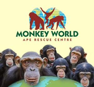 monkey-world-intro